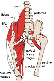 anterior view of hip